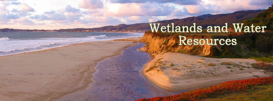 Wetlands and Water Resources